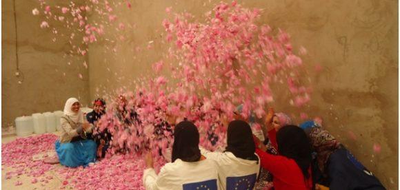 Formation des jeunes en agritourisme par la création, la gestion et la valorisation de pépinières de rose parfumé et plantes aromatiques : intégration de la dimension genre et renforcement des capacités locales